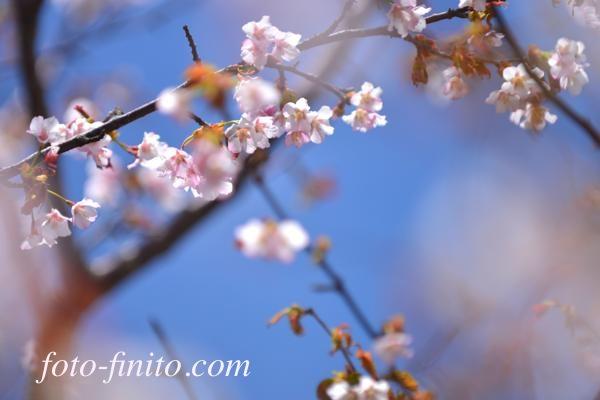130603sukai_05.jpg
