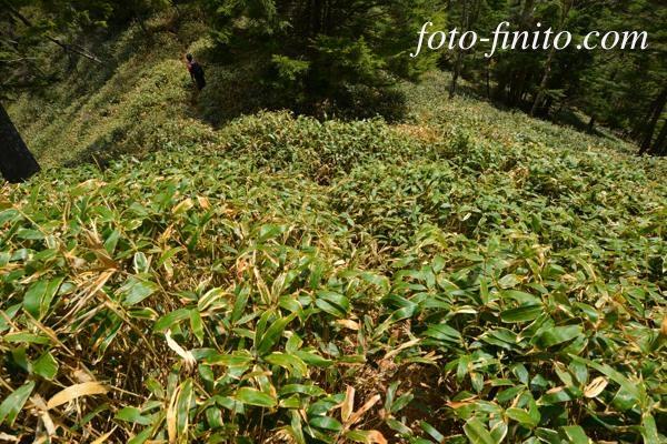 130603sukai_08.jpg